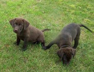 puppies-11