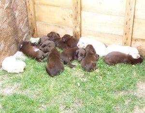 puppies-15