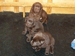 puppies-21
