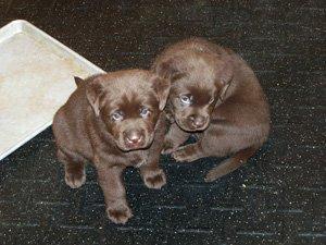 puppies-22