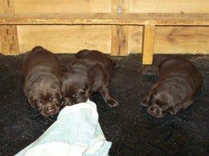 puppies-23